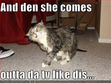 Lolcat_thering