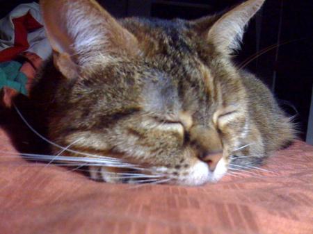 Kittysleep