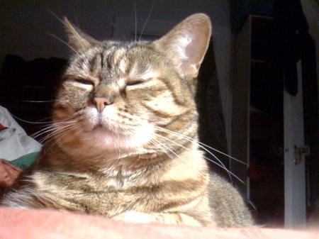 Kittysquint